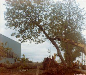 Arrachage des arbres le long du boulevard Halimbourg
